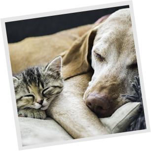 犬・猫の画像